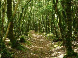 Bois du Nevet, sur la commune de Locronan